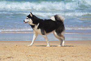 Dog-Friendly Walks: Melbourne