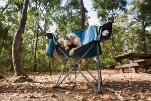 Pet-Friendly Camping