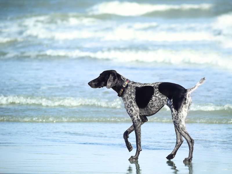 Holidaying with your Dog: Margaret River - Holidaying With Dogs