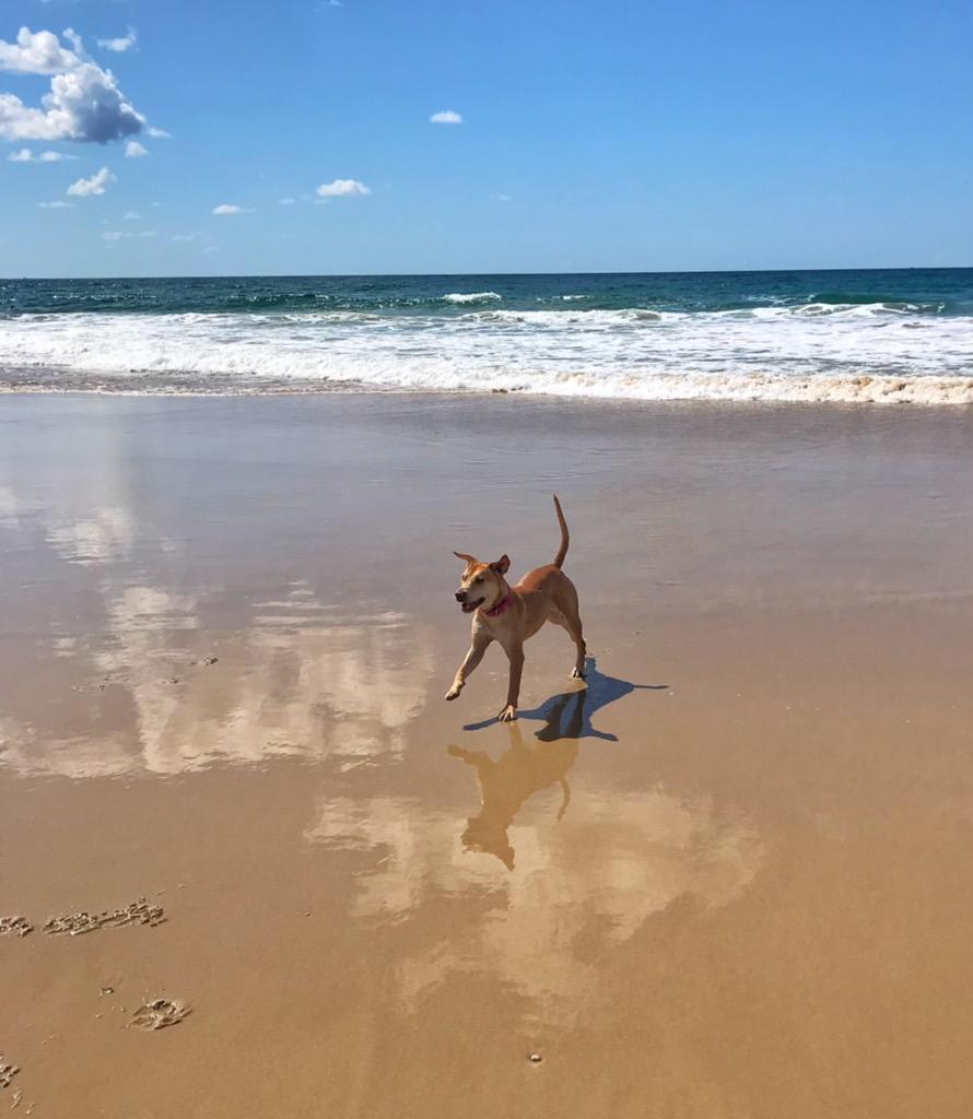 Learn to surf mudjimba